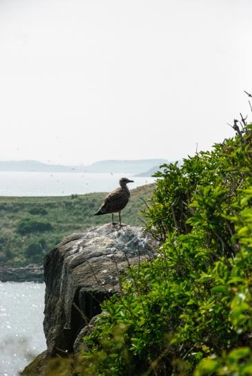 Inchcolm island_0107_edited-1